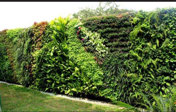 Jardines verticales y techos verdes de arve jardines for Plantas para muros verdes verticales