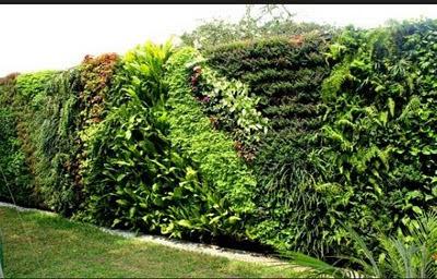 Jardines verticales y techos verdes de arve jardines Techos verdes y jardines verticales