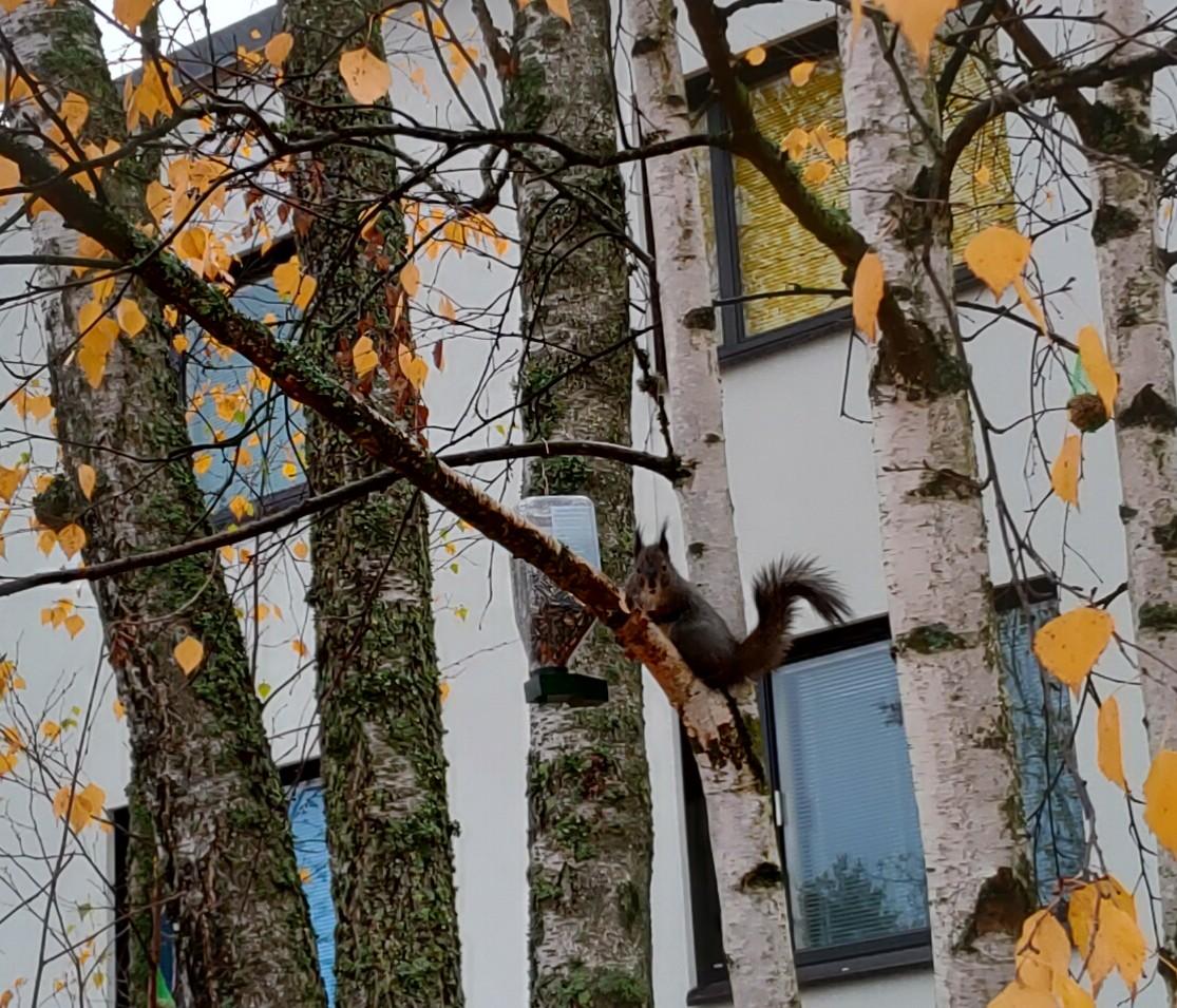 Orava tegemised