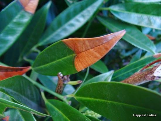 spring leaves 8