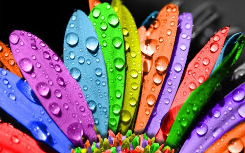 Imagenes De Flores Con Color