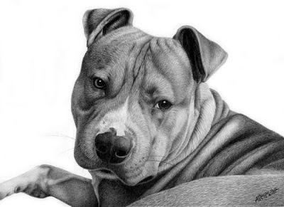 3 fofitos cãozinhos desenhados a Lápis grafites