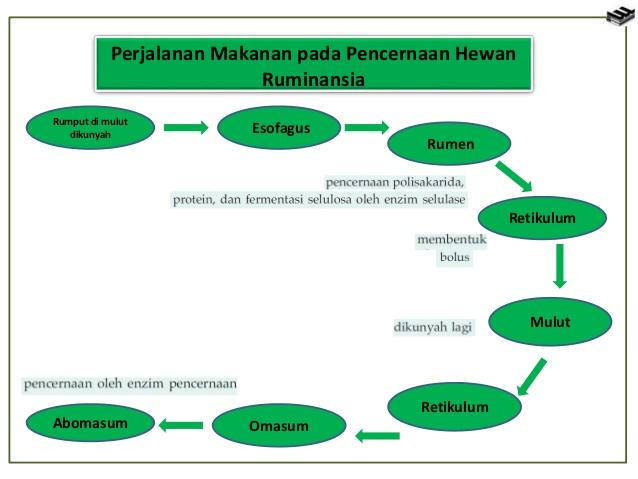 Proses Pencernaan pada Unggas