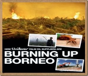 Burning Up Borneo