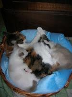 Kitten sitting...