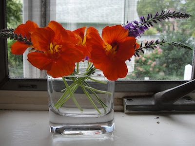 nasturtiums in vase summer