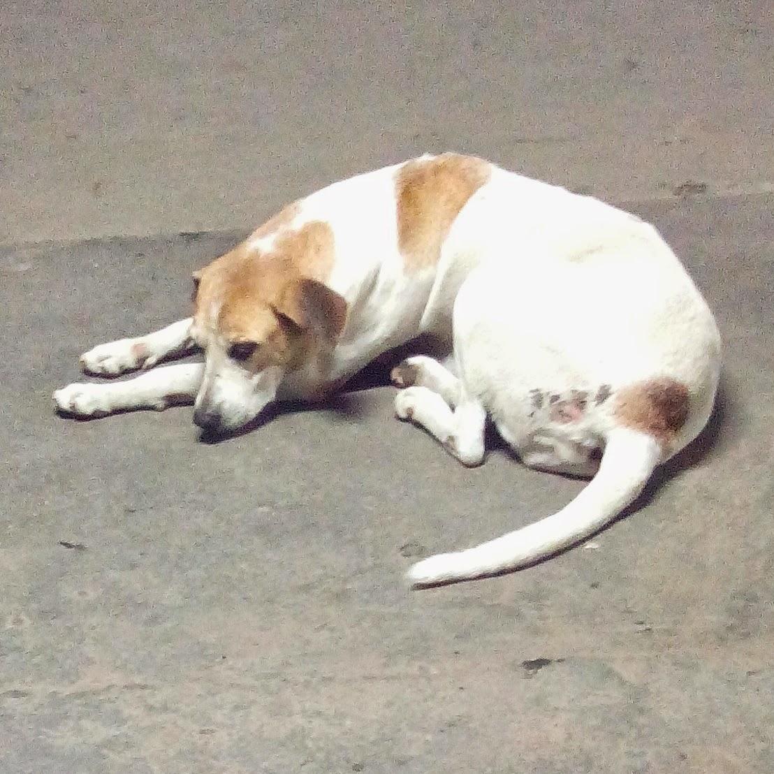dog sleeping peacefully photo