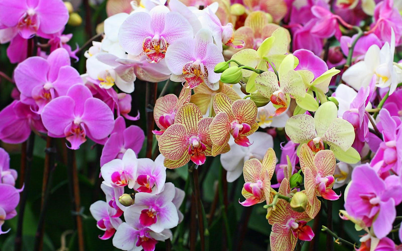 http://2.bp.blogspot.com/-64Z_JpNQ6sQ/T14nPdZNfaI/AAAAAAAAAVU/LABOZDZeAxo/s1600/Wonderful+Flowers+HD+Wallpapers+%2832%29.jpg