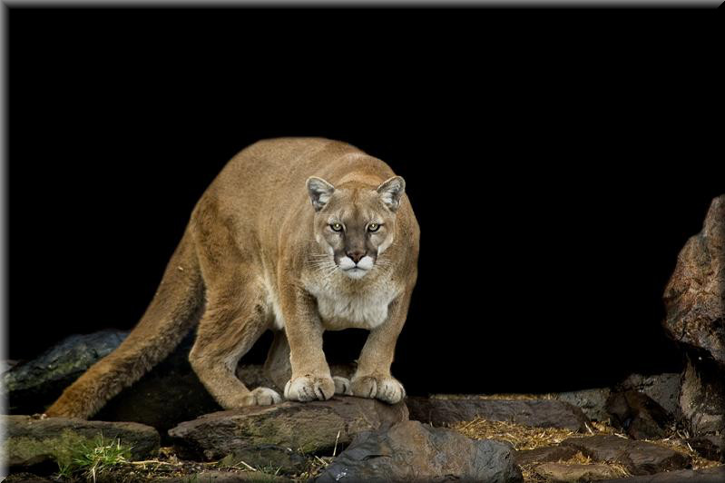 Es una fiera es monica lion - 4 8