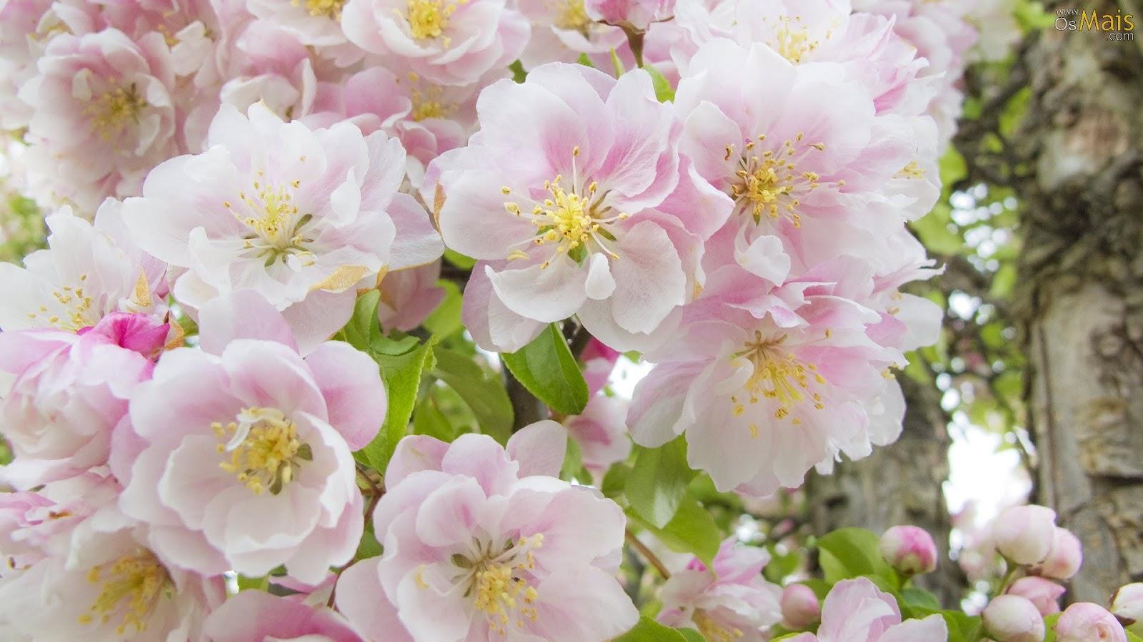 Wallpapernarium lindo ramo de flores rosadas - Ramos de flores hermosas ...