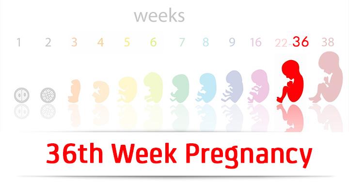 graviditet uger i alt