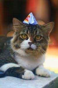 Perbandingan Umur Kucing dan Manusia, kucing imut,  kucing lucu,  kucing persia,  blacky