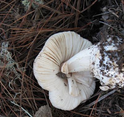 Mushroom Turned Upside Down, © B. Radisavljevic