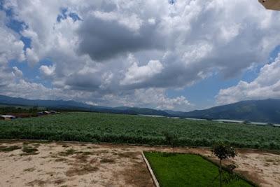 Trang Trại rộng Hơn 900ha, chủ yếu là dùng để trồng cỏ và bắp, loại cỏ voi của Thái Lan cho năng suất cao hơn cỏ voi VA06 mà Việt Nam thường trồng, có năng suất và hàm lượng protein cao hơn. Dùng chế biến thức ăn cho bò cùng với mật, bắp, bã cọ dầu,...sẵn có của HAGL ở Lào hay Campuchia
