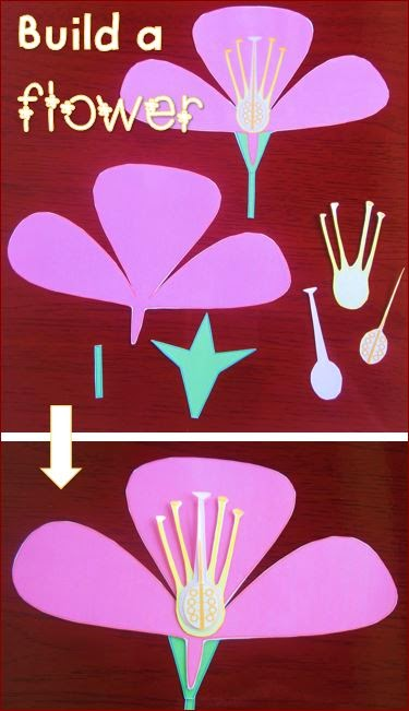 parts-of-a-flower-build-a flower-activity