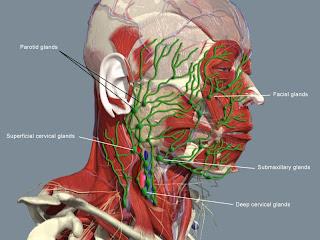 ten benh tieng anh Bệnh huyết học lymphagiology