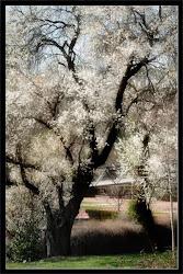 cargado de primavera