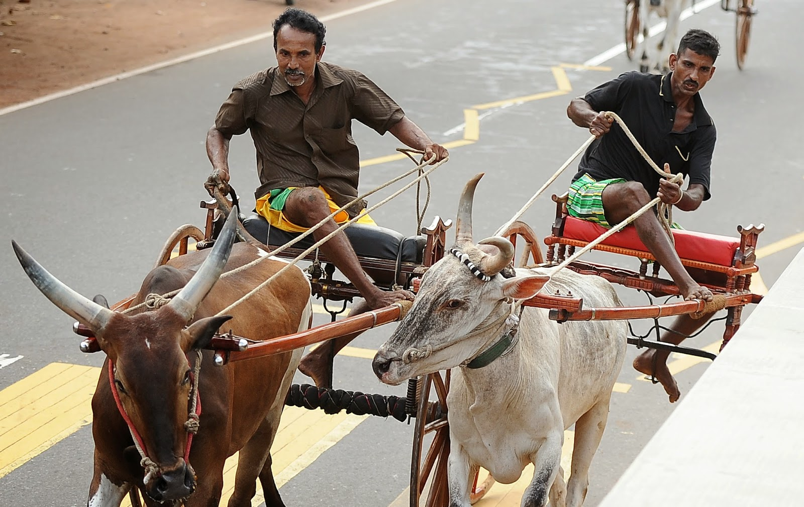 Animals, Bull Cart Race, Bull Race, Cart Race, Colombo, Culture, Game, Homagama, Lifestyle, Minority, New Year, News, Religious, Sinhala and Tamil New Year, Sinhalese, Sri Lanka, Tamils, Traditional, Traditional Games,