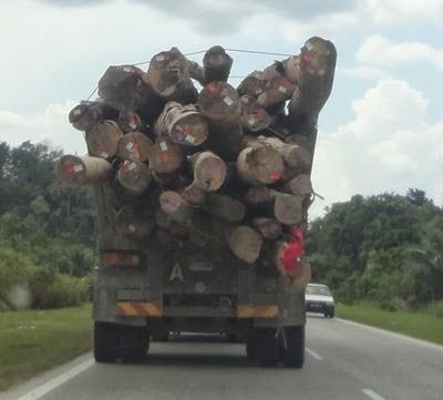kayu balak