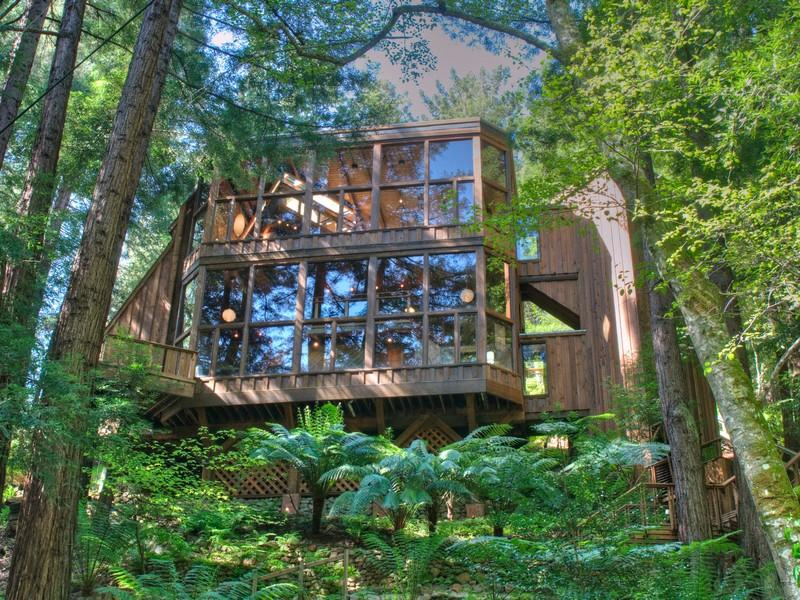 World of architecture tree house in the forest mill for Homes in mill valley ca