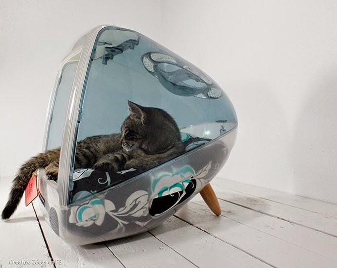 Camas de gatos con monitores transparentes