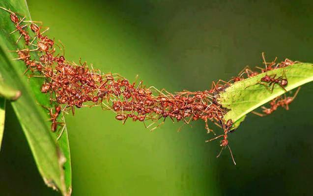jasa pengendalian semut
