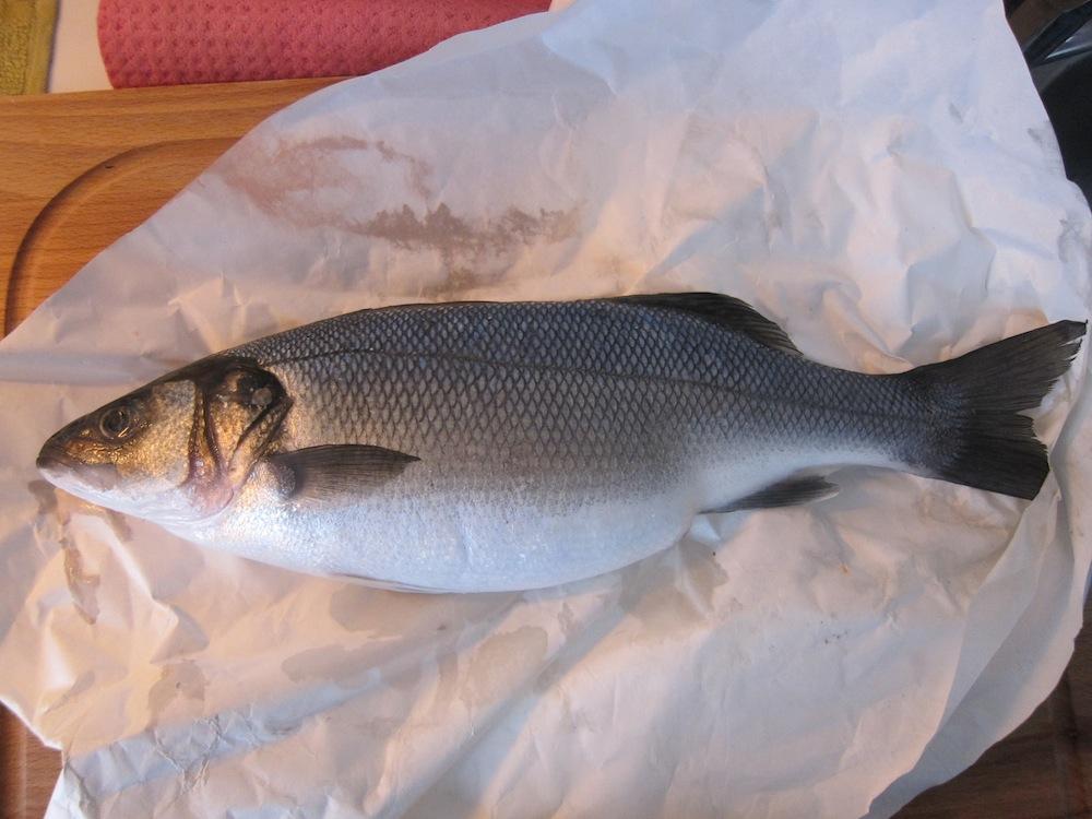Lezioni di pesce spigola vs cefalo scontro fra titani for Prezzo del ferro al kg oggi