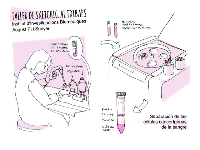 treball al laboratori de Idibaps