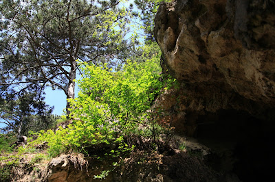 am Eingang der Elfenhöhle