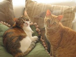 Els meus gats