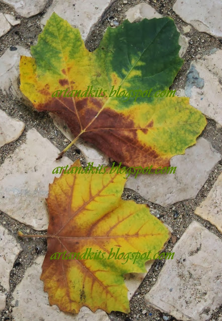 No Outono cada folha parece uma flor lançada aos nossos pés, como um pedido de desculpa da Natureza. / In the Fall each leaf looks like a flower thrown at our feet as an apology from Nature.