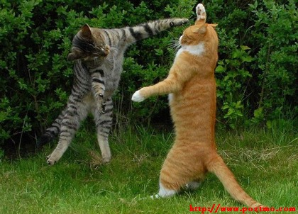 kumpulan gambar gambar foto lucu kucing