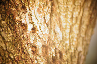 tree bark free picture