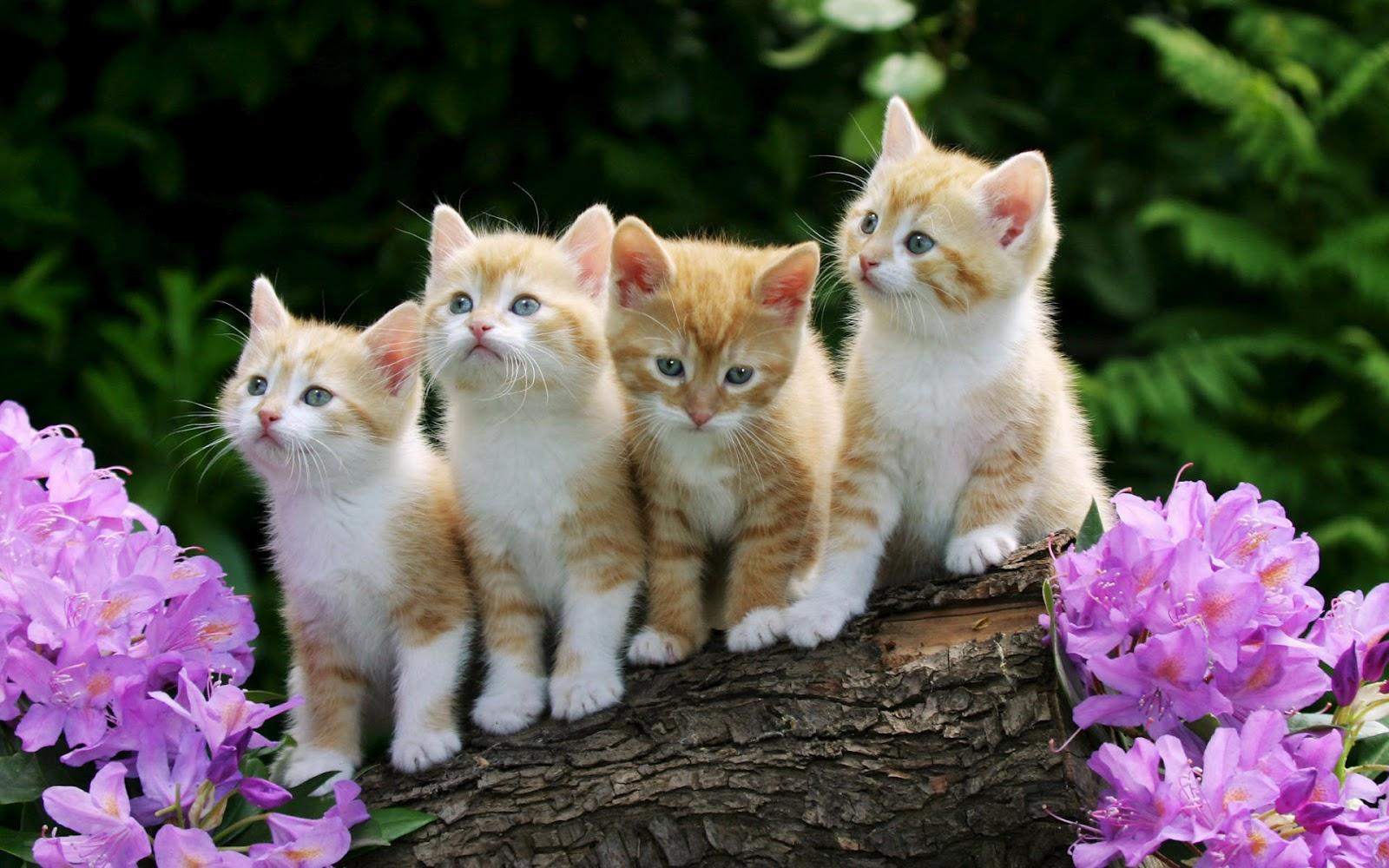 Kissa taustakuvat