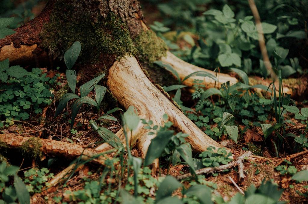 Detaljbild på rötter vid bröllopsfotografering