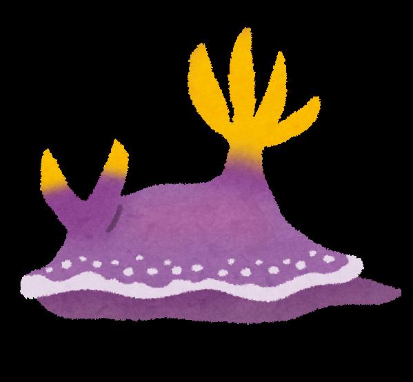 ウミウシの画像 p1_7