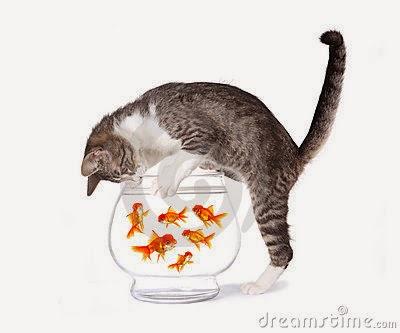 Mèo nghịch hồ cá cảnh