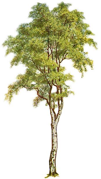 free oak tree clip art. free oak tree clip art