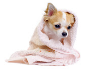 pupy dog picture animals dogs cute dog