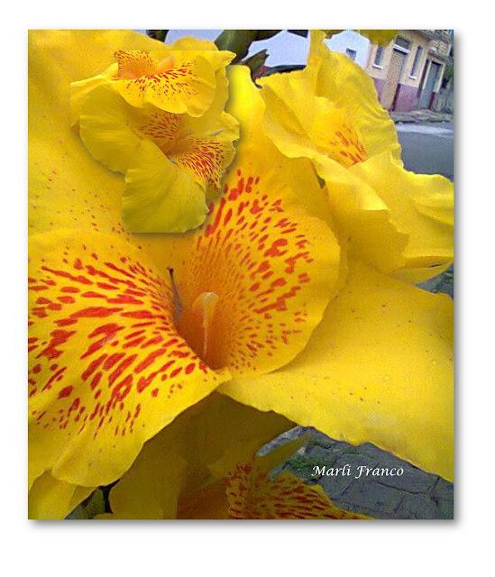 flor de jardim amarela:FOTO – Prisma de um Olhar – Marli Franco: Quando no Amarelo caiu