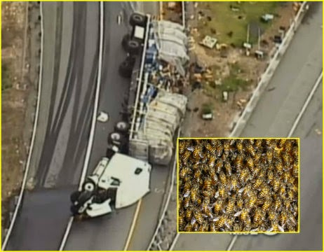 20 Million Bees Released In Car Crash