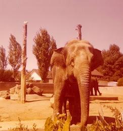 Melbourner Zoo 1972