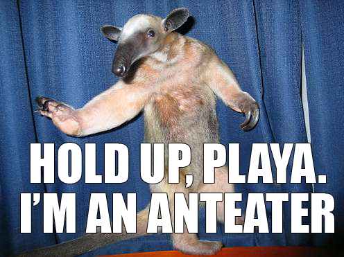Anteater fuck you