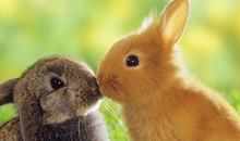 صور أرانب مميزة