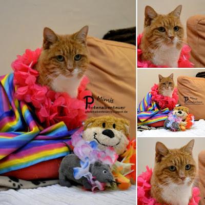Katze Mimi hat ihr eigenes Kostüm für Fasching