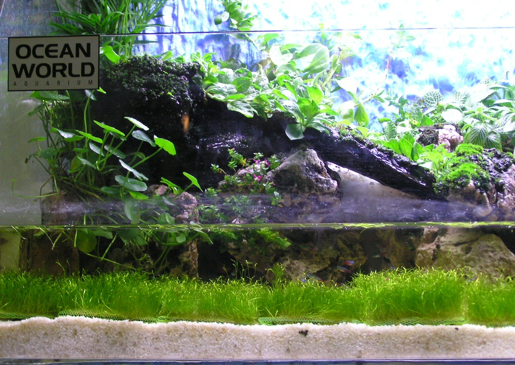 My fresh water aquarium natural planted tank walstad for Self sustaining fish tank