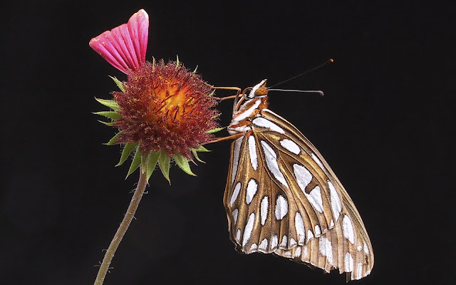 Best Jungle Life butterfly wallpaper, flower wallpaper, hq wallpapers