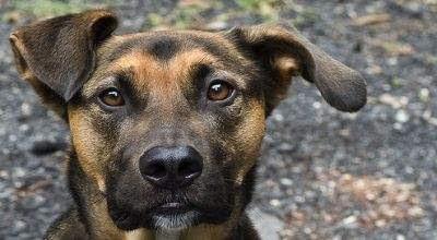 Anjing ini menyelamatkan seorang gadis belia lho.