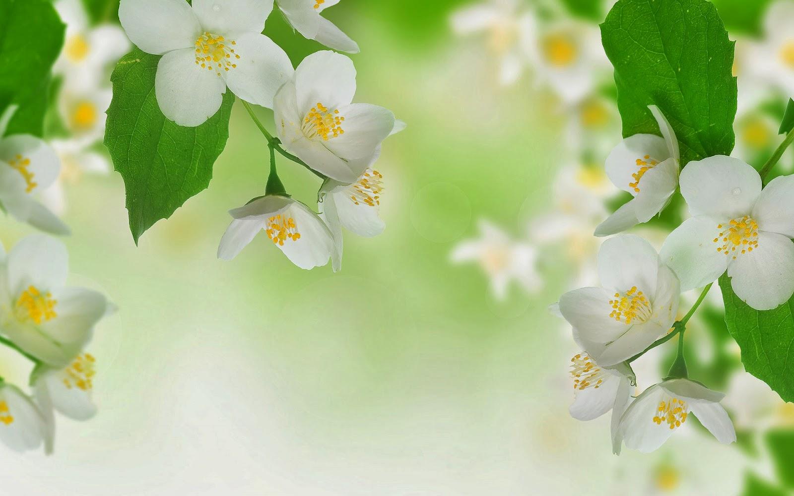 Witte bloemen met groene bladeren