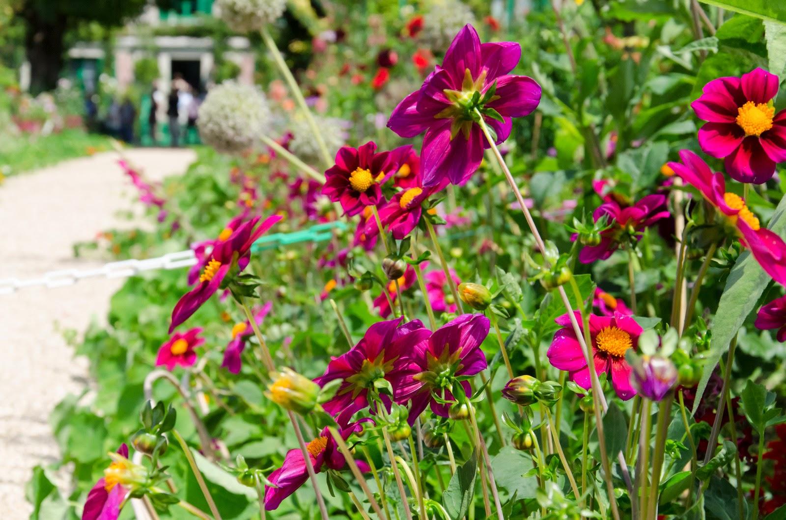 Giverny - maison de Monet - jardin